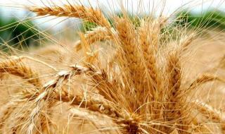Контроль движения и анализа зерна на току и элеваторе