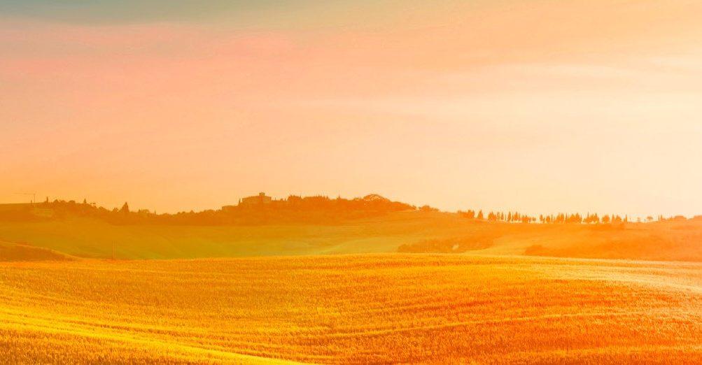 IAK Agrarconsulting GmbH